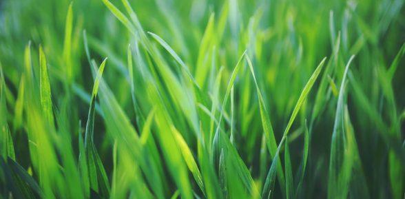 La Guida 2020 per Rigenerare il Prato a Primavera