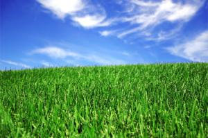 green-lawn-1