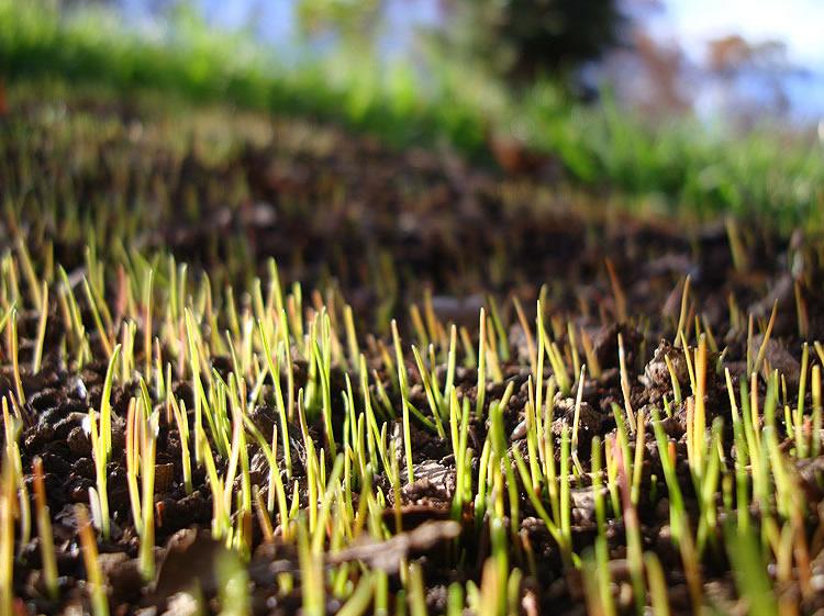 Il periodo migliore per seminare l erba nel prato bestprato - Quando seminare erba giardino ...