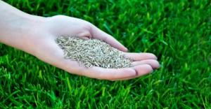 Come scegliere i semi per prato guida pratica bestprato