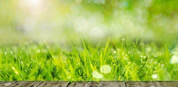 Il blog di consigli di giardinaggio pratico for Quando concimare il prato