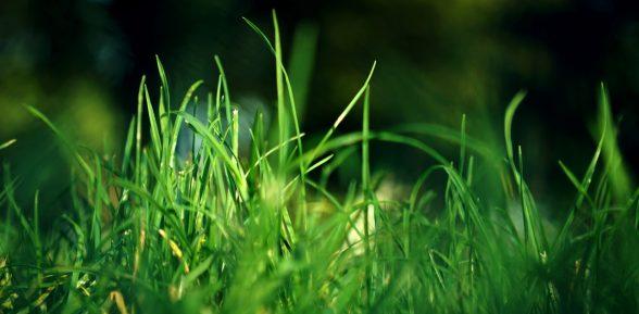 La Guida per Rigenerare il Prato in Autunno – Ver. 1.5