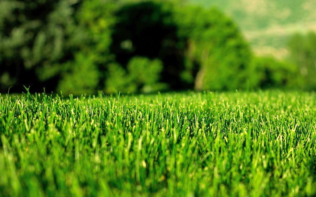 Guida Completa per Rigenerare il Prato in Primavera. | Bestprato