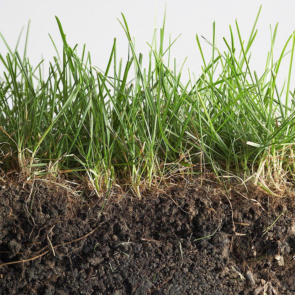 Terra Buona Per Giardino le caratteristiche di un buon terreno per il prato   bestprato