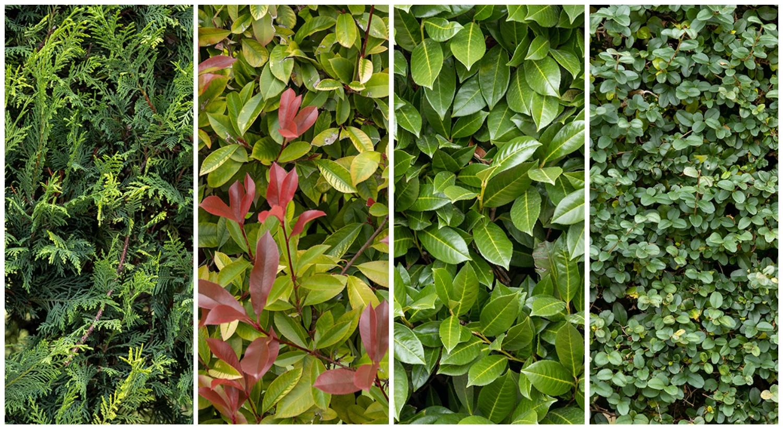 Grandi Alberi Da Giardini la concimazione invernale della siepe da giardino   bestprato