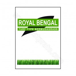 Bermudagrass Royal Bengal