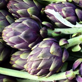 Carciofo Violet de Provence |  Bestprato by Hortus