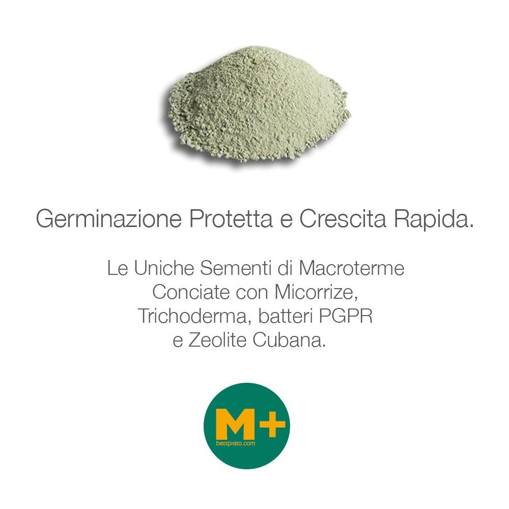 Manutenzione Prato Di Gramignone m+ paspalum notatum | bestprato - 1kg