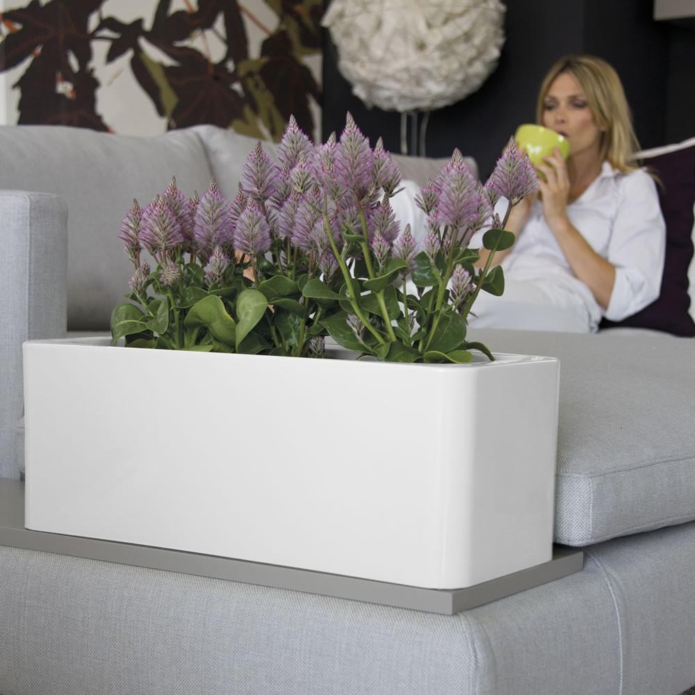 Fioriera a cassetta per vasi e piante calypso nicoli for Vasi per piante da interno moderni