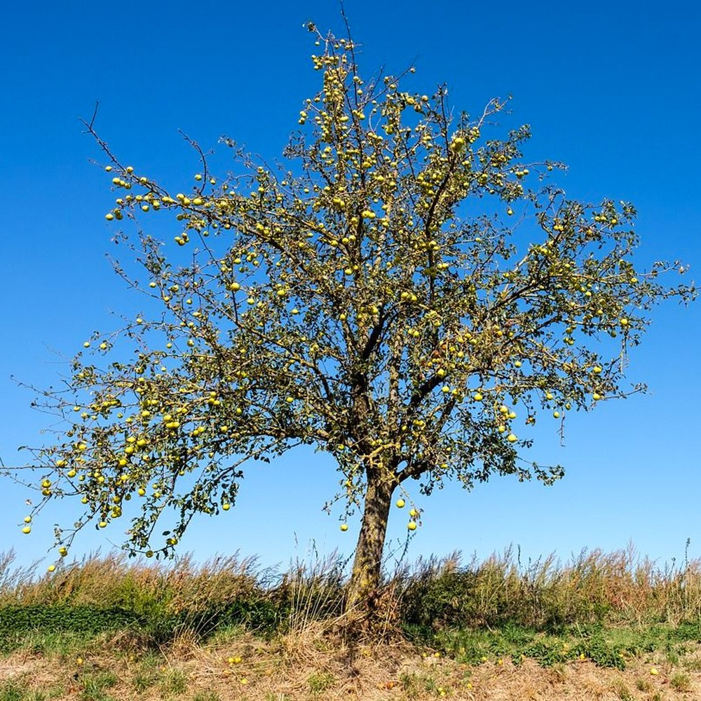 Prezzi Alberi Da Giardino concime alberi da frutto biologico - 4 kg