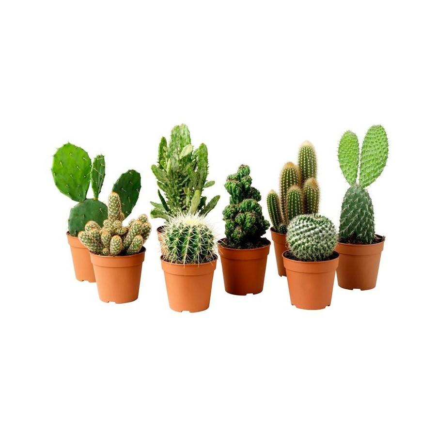 Concime per piante grasse verdevivo vendita online for Piante on line