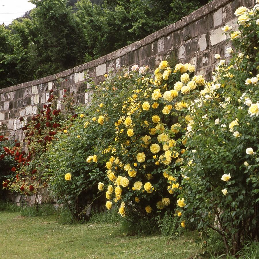 Tutori Per Rose Rampicanti concime rose naturale agribios - 1 kg