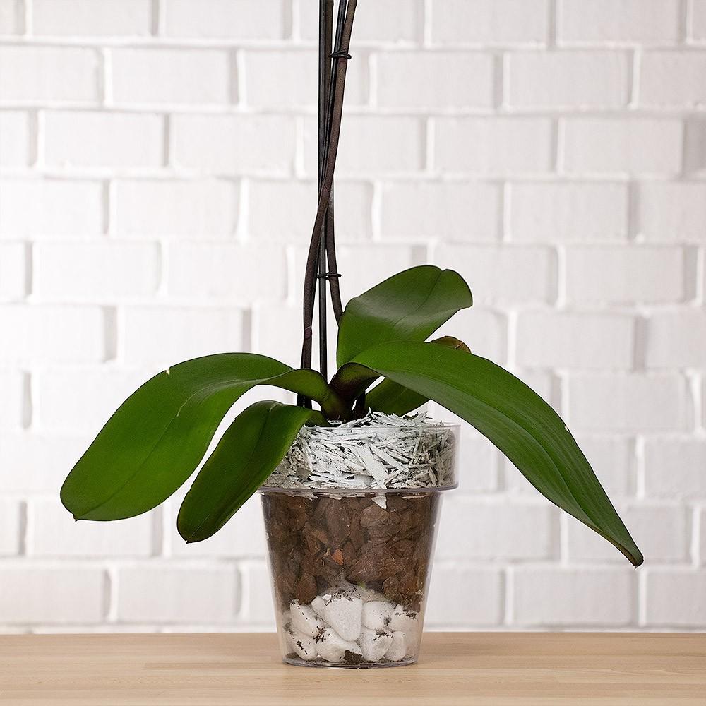Vaso per orchidea trasparente vendita online - Vaso in gres per orchidee ...