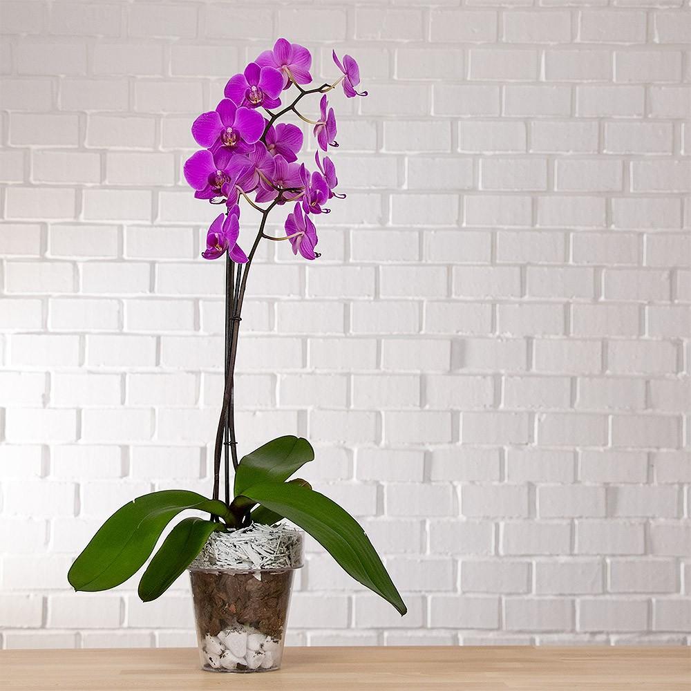 Vaso per orchidea trasparente vendita online - Vasi per orchidee ...