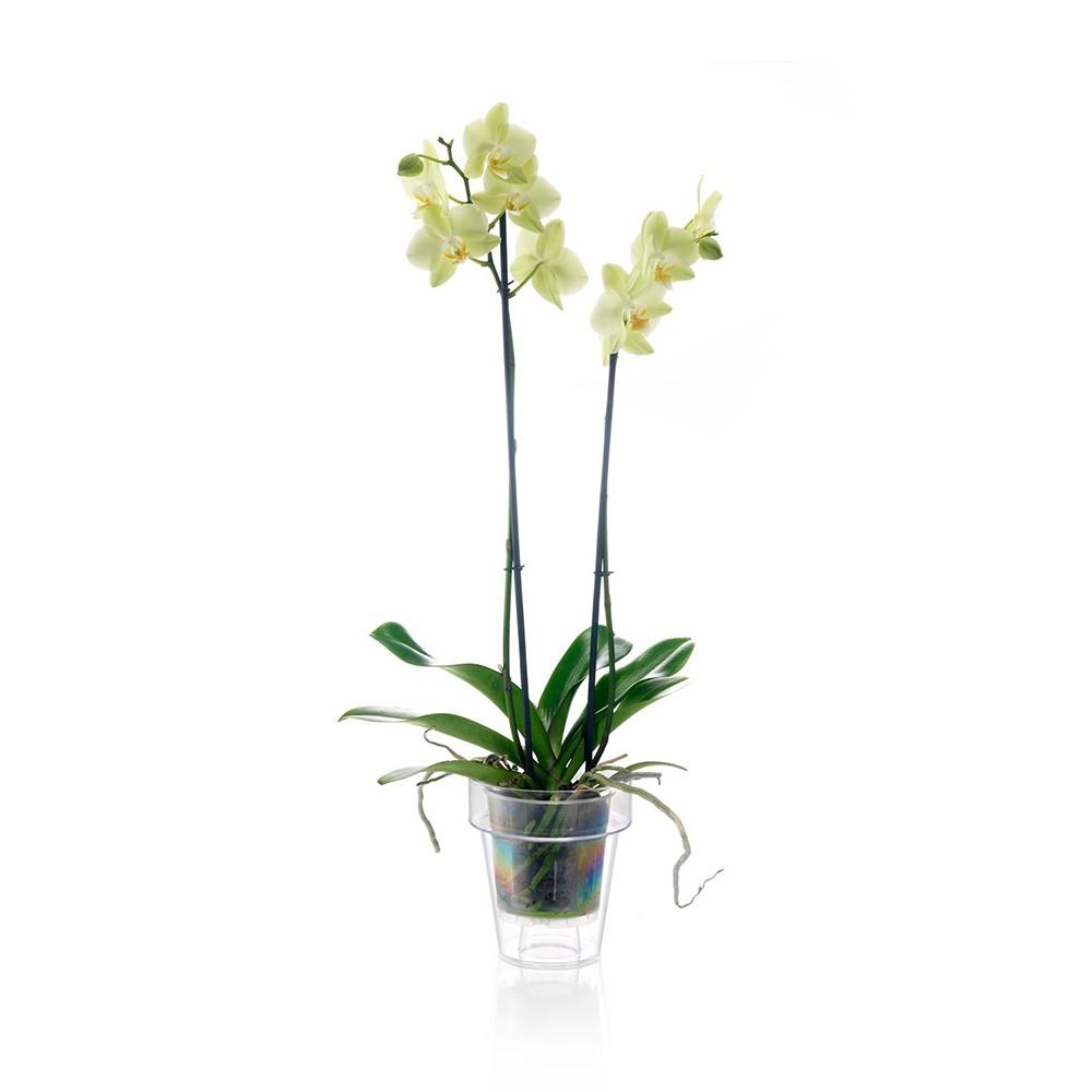 Vaso per orchidea trasparente vendita online for Vasi per orchidee ikea