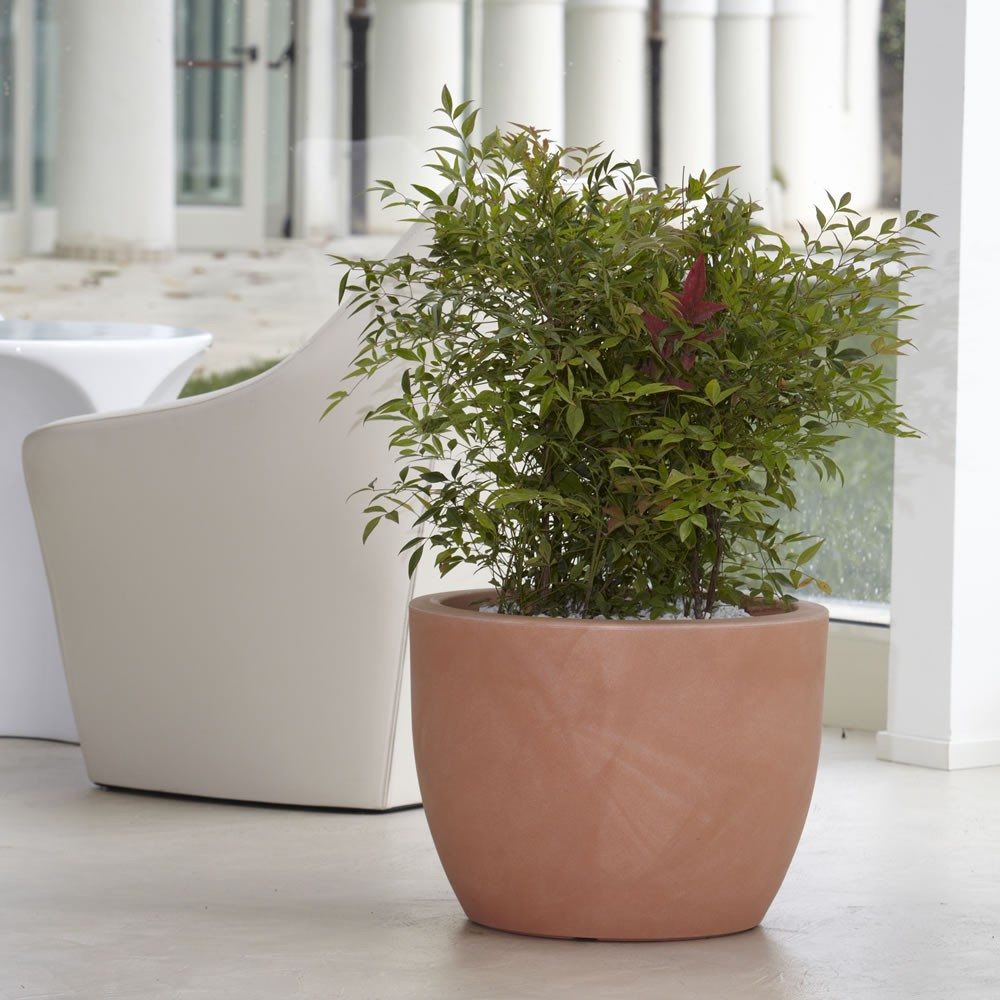 Alberi da vaso giardino mediterraneo - Prezzi alberi da giardino ...