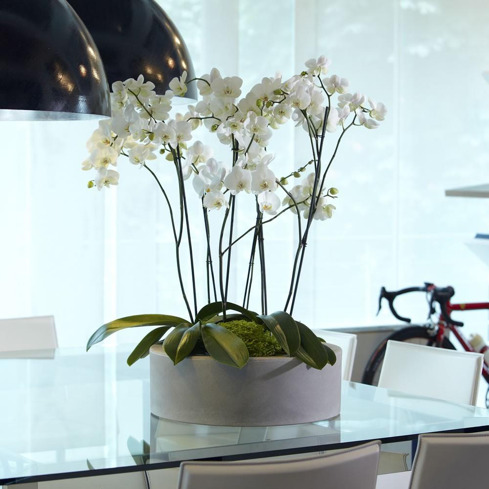 Vaso x piante in resina zoe nicoli for Vasi per piante da interno moderni