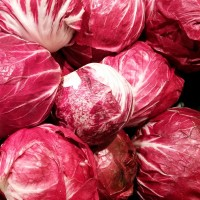 Cicoria Palla Rossa 3 |  Bestprato by Hortus