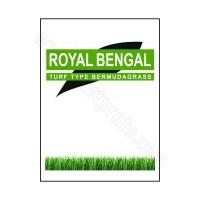 Bermudagrass Royal Bengal