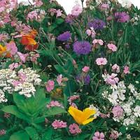 Semi di Miscuglio Fiorito Prato Giapponese (Flower mix)