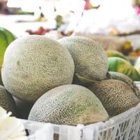 Melone Retato degli Ortolani |  Bestprato by Hortus