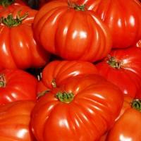 Pomodoro Cuore di Bue |  Bestprato by Hortus