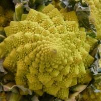 Broccolo Romanesco |  Bestprato by Hortus