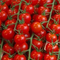 Pomodoro Red Cherry |  Bestprato by Hortus