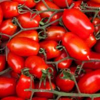 Pomodoro Rio Grande |  Bestprato by Hortus