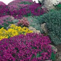 Semi di Miscuglio di Fiori da Roccia (Flower mix)