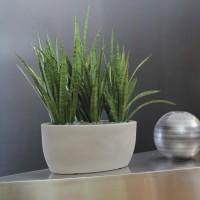 Vaso ovale Athena