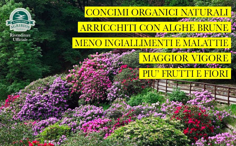 concime per orchidee, agrumi, ulivo e piante grasse