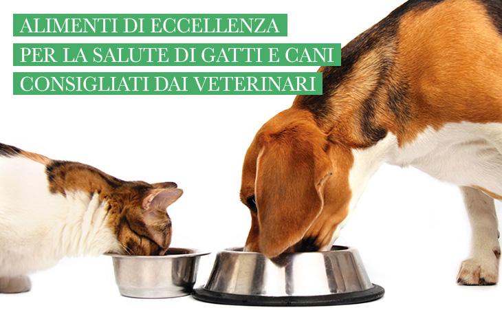 cibo per cani e gatti