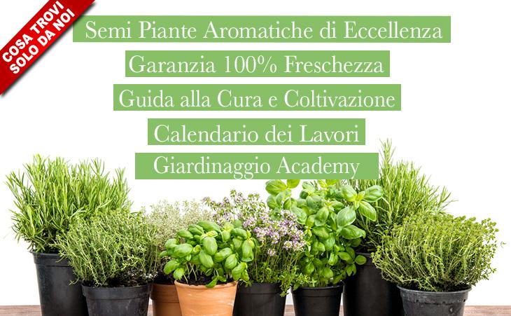 sementi piante aromatiche